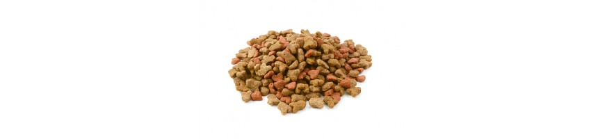 Cat Dry food