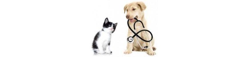 Cat Pharmacy